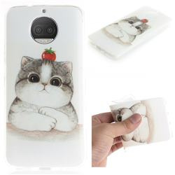 Cute Tomato Cat IMD Soft TPU Cell Phone Back Cover for Motorola Moto G5S Plus