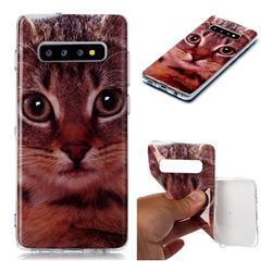 Garfield Cat Soft TPU Cell Phone Back Cover for Samsung Galaxy S10 Plus(6.4 inch)