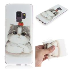 Cute Tomato Cat IMD Soft TPU Cell Phone Back Cover for Samsung Galaxy S9